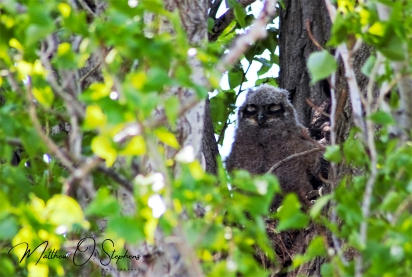 Owlet from Potholes-2