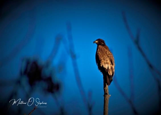 Potholes eagles final edits -2
