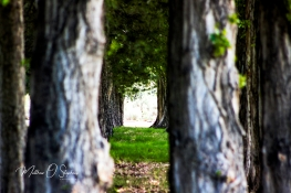 Treeline in the park